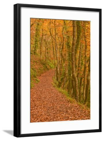 Hannicombe Wood Near to Fingle Bridge-Julian Elliott-Framed Art Print