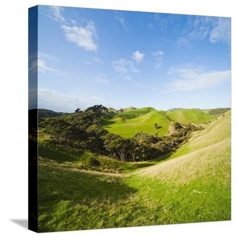 Countryside on the Walk to Wharariki Beach-Matthew Williams-Ellis-Stretched Canvas Print