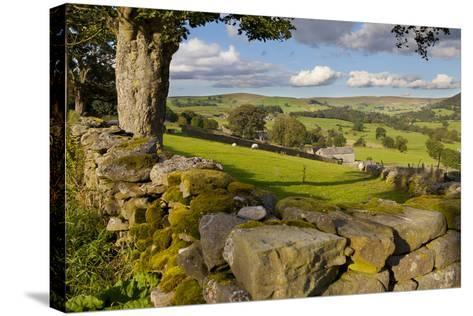 Farm Near Burnsall, Yorkshire Dales National Park, Yorkshire, England, United Kingdom, Europe-Miles Ertman-Stretched Canvas Print