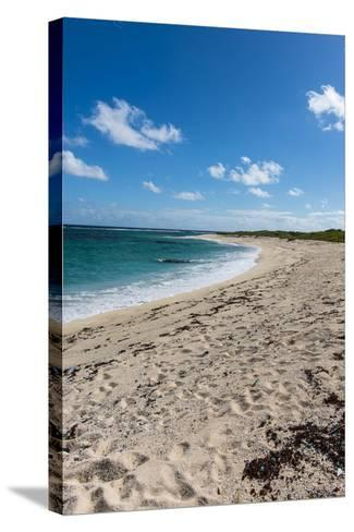 Remote White Sand Beach in Barbuda, Antigua and Barbuda, West Indies, Caribbean, Central America-Michael Runkel-Stretched Canvas Print