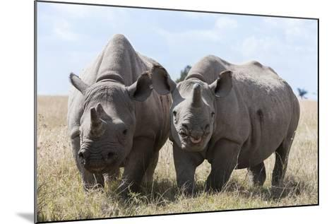 Two Rhinoceros, Ol Pejeta Conservancy, Laikipia, Kenya, East Africa, Africa-Ann and Steve Toon-Mounted Photographic Print