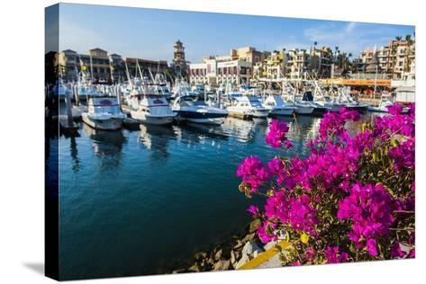 Colourful Flowers in the Harbour of Los Cabos, Baja California, Mexico, North America-Michael Runkel-Stretched Canvas Print