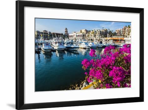 Colourful Flowers in the Harbour of Los Cabos, Baja California, Mexico, North America-Michael Runkel-Framed Art Print