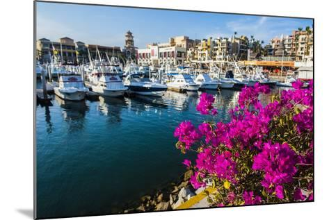 Colourful Flowers in the Harbour of Los Cabos, Baja California, Mexico, North America-Michael Runkel-Mounted Photographic Print
