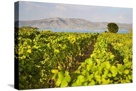 Vineyard, Lumbarda, Korcula Island, Dalmatian Coast, Adriatic, Croatia, Europe-Matthew Williams-Ellis-Stretched Canvas Print