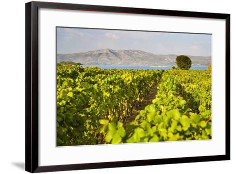 Vineyard, Lumbarda, Korcula Island, Dalmatian Coast, Adriatic, Croatia, Europe-Matthew Williams-Ellis-Framed Art Print