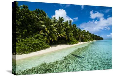 Paradise White Sand Beach in Turquoise Water on Ant Atoll, Pohnpei, Micronesia, Pacific-Michael Runkel-Stretched Canvas Print
