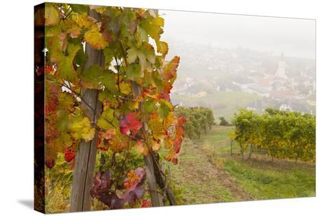 Vineyards Above Spitz an Der Danau, Wachau, Austria, Europe-Miles Ertman-Stretched Canvas Print