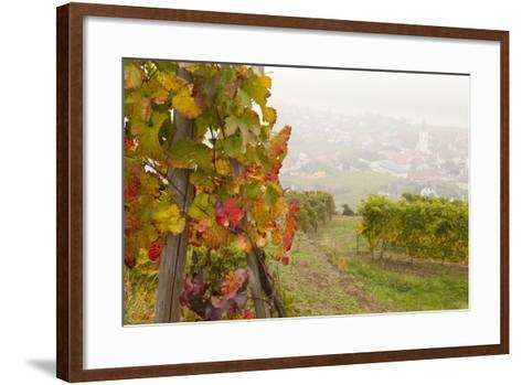 Vineyards Above Spitz an Der Danau, Wachau, Austria, Europe-Miles Ertman-Framed Art Print