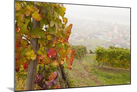Vineyards Above Spitz an Der Danau, Wachau, Austria, Europe-Miles Ertman-Mounted Photographic Print