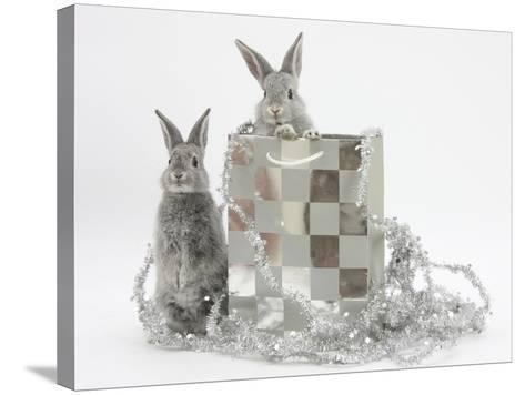 Two Baby Silver Rabbits in a Gift Bag with Christmas Tinsel-Mark Taylor-Stretched Canvas Print