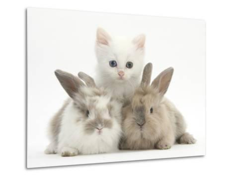 White Kitten and Baby Rabbits-Mark Taylor-Metal Print