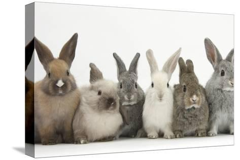 Six Baby Rabbits in Line-Mark Taylor-Stretched Canvas Print