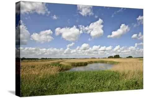 Reed Beds at Joist Fen, Lakenheath Fen Rspb Reserve, Suffolk, UK, May 2011-Terry Whittaker-Stretched Canvas Print