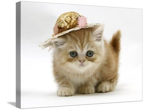 Ginger Kitten Wearing a Straw Hat-Mark Taylor-Stretched Canvas Print