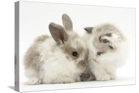 Colourpoint Kitten with Baby Rabbit-Mark Taylor-Stretched Canvas Print