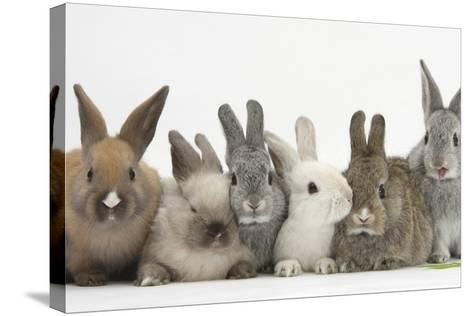 Six Baby Rabbits-Mark Taylor-Stretched Canvas Print