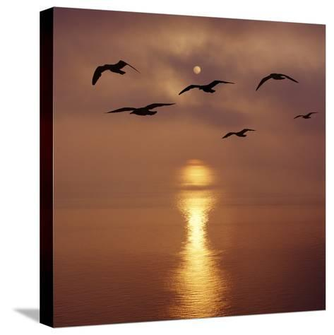 Sunrise over the Sea with Seagulls, UK-Mark Taylor-Stretched Canvas Print