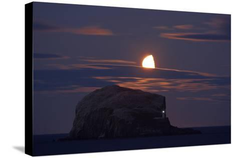 Northern Gannet (Morus Bassanus) Colony, Bass Rock with the Moon Rising, Firth of Forth, Scotland- Green-Stretched Canvas Print