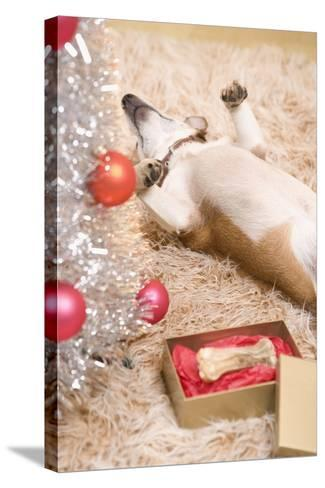 Dog Lying on Rug by Christmas Tree--Stretched Canvas Print