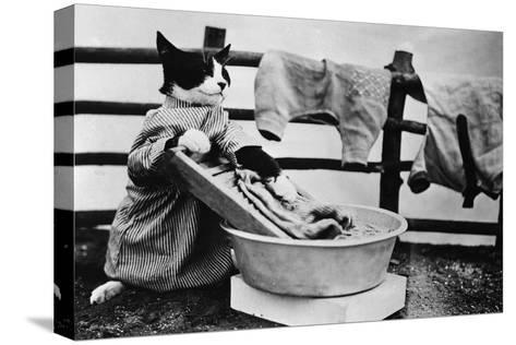 Dressed Up Cat Washing Clothes in Wash Tub--Stretched Canvas Print
