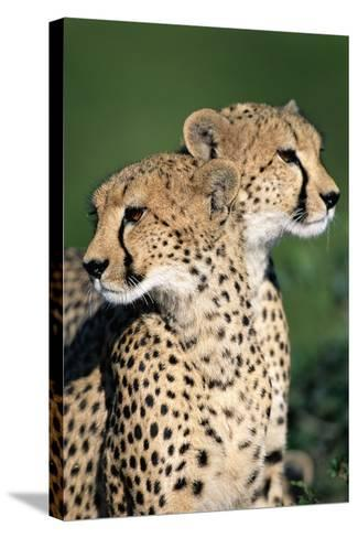 Two Cheetahs-Paul Souders-Stretched Canvas Print