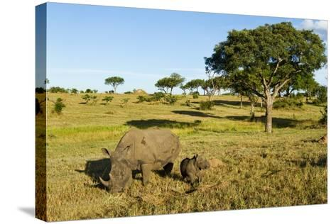 Black Rhino, Sabi Sabi Reserve, South Africa-Paul Souders-Stretched Canvas Print