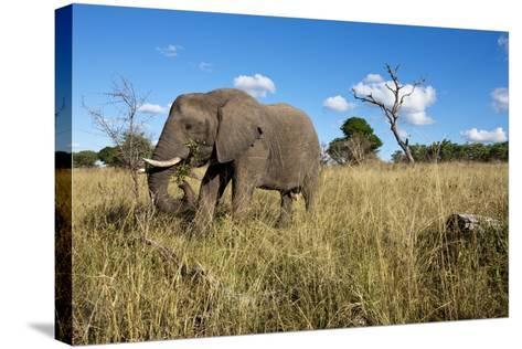 Elephant, Sabi Sabi Reserve, South Africa-Paul Souders-Stretched Canvas Print