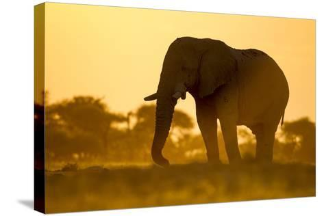 Elephant at Water Hole, Nxai Pan National Park, Botswana-Paul Souders-Stretched Canvas Print