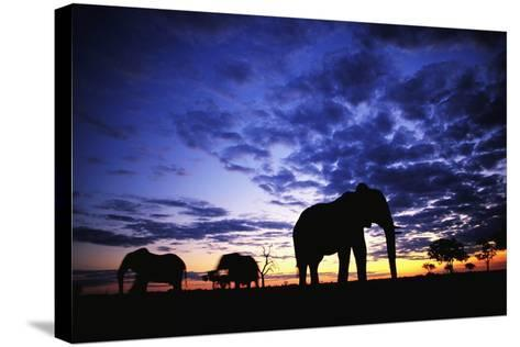 Elephant Silhouettes-Paul Souders-Stretched Canvas Print