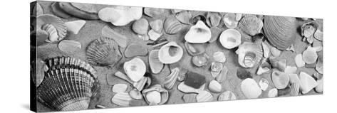 High Angle View of Seashells--Stretched Canvas Print