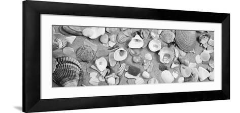 High Angle View of Seashells--Framed Art Print