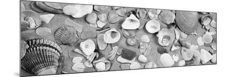 High Angle View of Seashells--Mounted Photographic Print