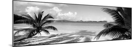 Palm Trees on the Beach, Us Virgin Islands, USA--Mounted Photographic Print