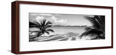 Palm Trees on the Beach, Us Virgin Islands, USA--Framed Art Print