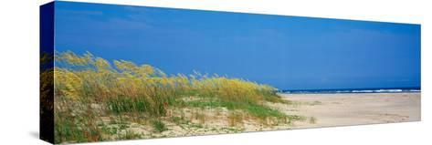 Sea Oat Grass on the Beach, Charleston, South Carolina, USA--Stretched Canvas Print