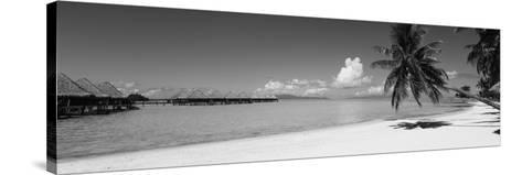 Palm Tree on the Beach, Moana Beach, Bora Bora, Tahiti, French Polynesia--Stretched Canvas Print