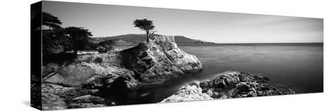 Cypress Tree at the Coast, the Lone Cypress, 17 Mile Drive, Carmel, California, USA--Stretched Canvas Print