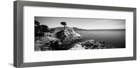 Cypress Tree at the Coast, the Lone Cypress, 17 Mile Drive, Carmel, California, USA--Framed Art Print