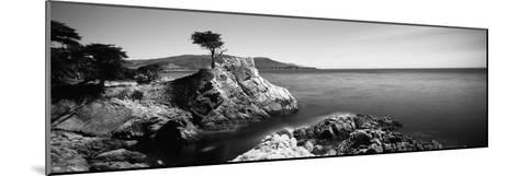 Cypress Tree at the Coast, the Lone Cypress, 17 Mile Drive, Carmel, California, USA--Mounted Photographic Print