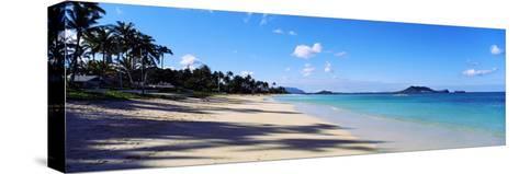 Palm Trees on the Beach, Lanikai Beach, Oahu, Hawaii, USA--Stretched Canvas Print