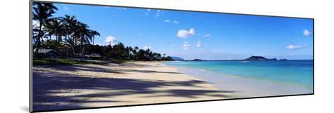 Palm Trees on the Beach, Lanikai Beach, Oahu, Hawaii, USA--Mounted Photographic Print