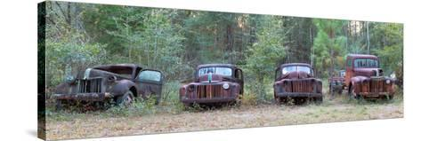 Old Rusty Cars and Trucks on Route 319, Crawfordville, Wakulla County, Florida, USA--Stretched Canvas Print