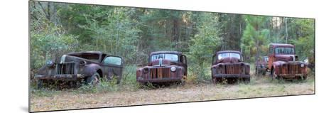 Old Rusty Cars and Trucks on Route 319, Crawfordville, Wakulla County, Florida, USA--Mounted Photographic Print