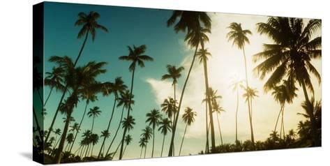 Palm Trees Along the Beach in Morro De Sao Paulo, Tinhare, Cairu, Bahia, Brazil--Stretched Canvas Print