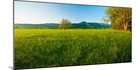 Lone Oak Tree in a Field, Cades Cove, Great Smoky Mountains National Park, Tennessee, USA--Mounted Photographic Print