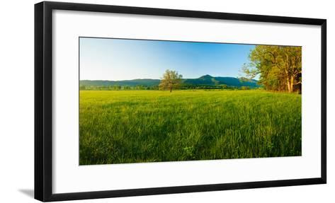 Lone Oak Tree in a Field, Cades Cove, Great Smoky Mountains National Park, Tennessee, USA--Framed Art Print
