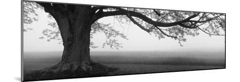 Tree in a Farm, Knox Farm State Park, East Aurora, New York State, USA--Mounted Photographic Print