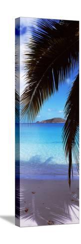 Palm Tree on the Beach, Maho Bay, Virgin Islands National Park, St. John, Us Virgin Islands--Stretched Canvas Print