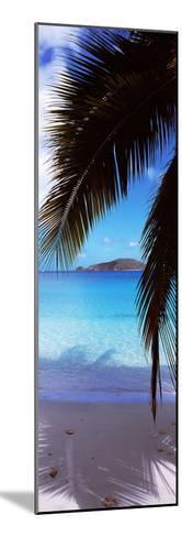 Palm Tree on the Beach, Maho Bay, Virgin Islands National Park, St. John, Us Virgin Islands--Mounted Photographic Print